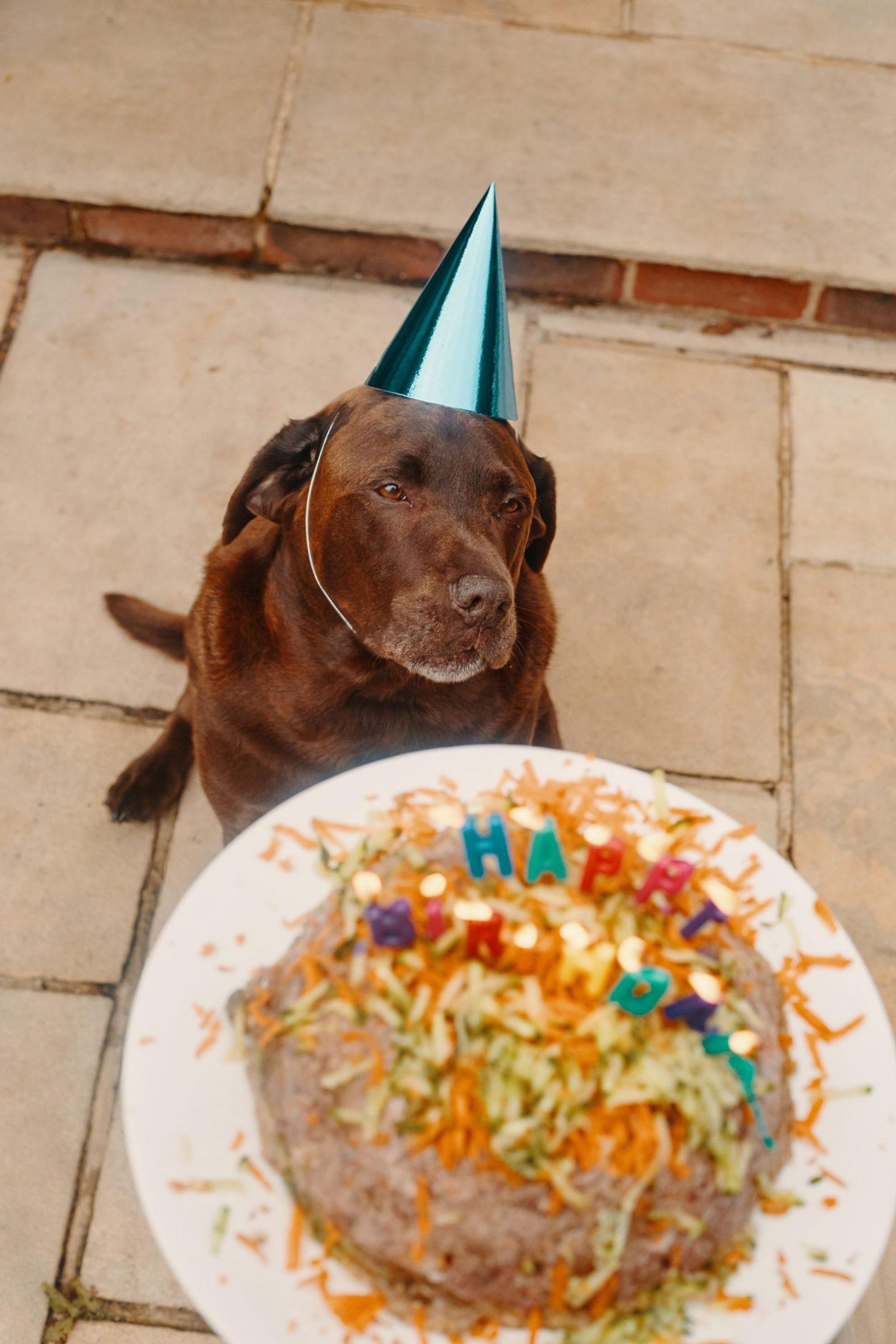 Superb Make Your Dog A Birthday Cake Katie Pix Blogger Youtube Chef Personalised Birthday Cards Akebfashionlily Jamesorg